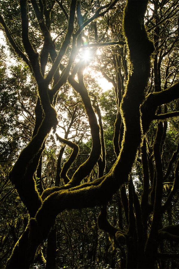 Drömskog på vägen mellan Valle Gran Rey och Playa de Santiago